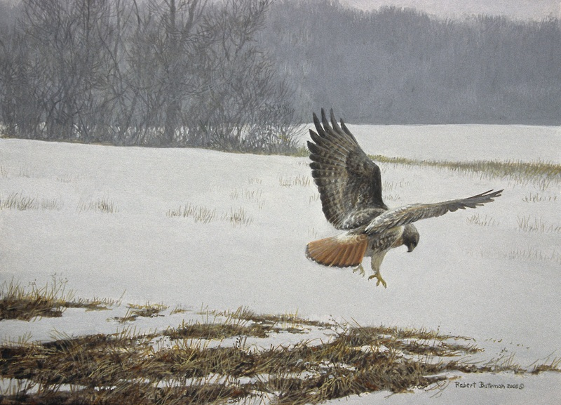 Robert Bateman Swanson's Field - Red Tail Hawk