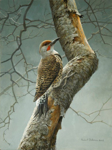 Robert Bateman Flicker on Apple Tree