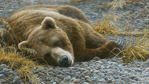 Robert Bateman Grizzly At Rest