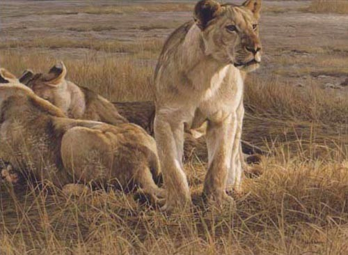 Robert Bateman Lions At Dawn