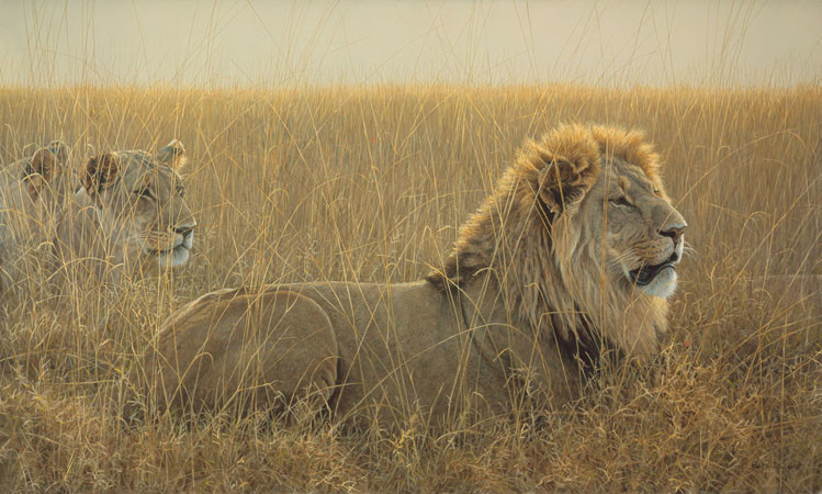 Robert Bateman Lions in the Grass