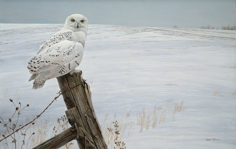 Robert Bateman Ready for the Hunt – Snowy Owl