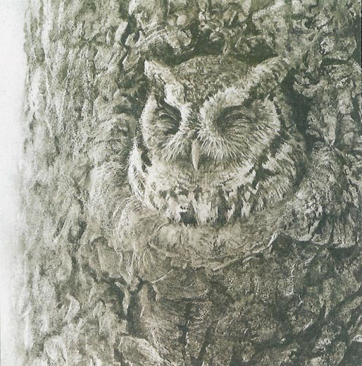 Robert Bateman Screech Owl in Apple Tree