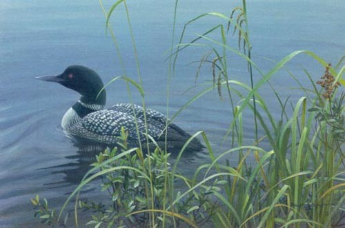 Robert Bateman Shoreline – Common Loon