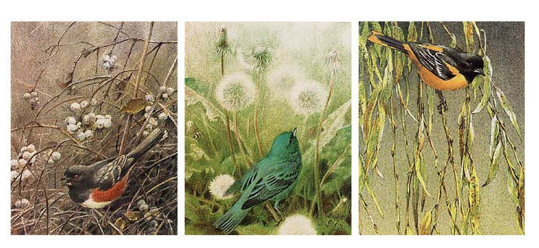 Robert Bateman Songbird Set