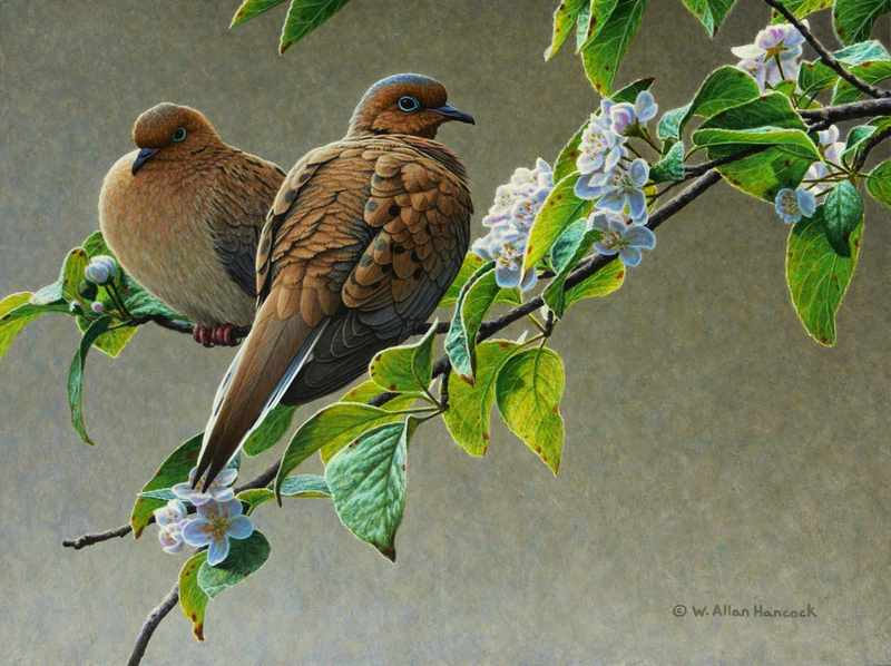 W. Allan Hancock Blossoming - Mourning Doves