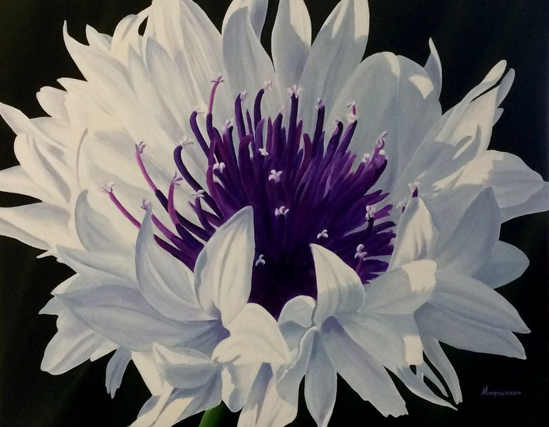 Dennis Magnusson White Cornflower