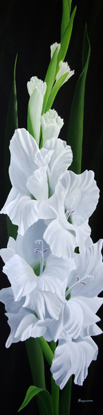 Dennis Magnusson White on White - Gladiolus