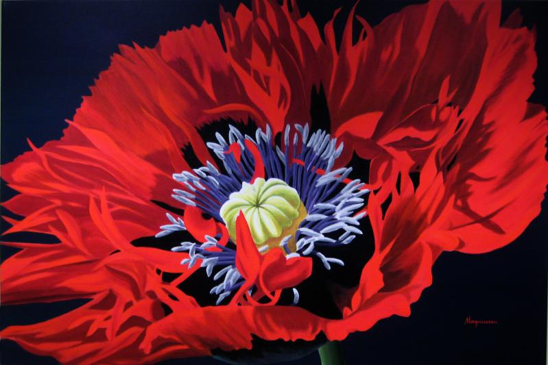 Dennis Magnusson Red Fringed Poppy