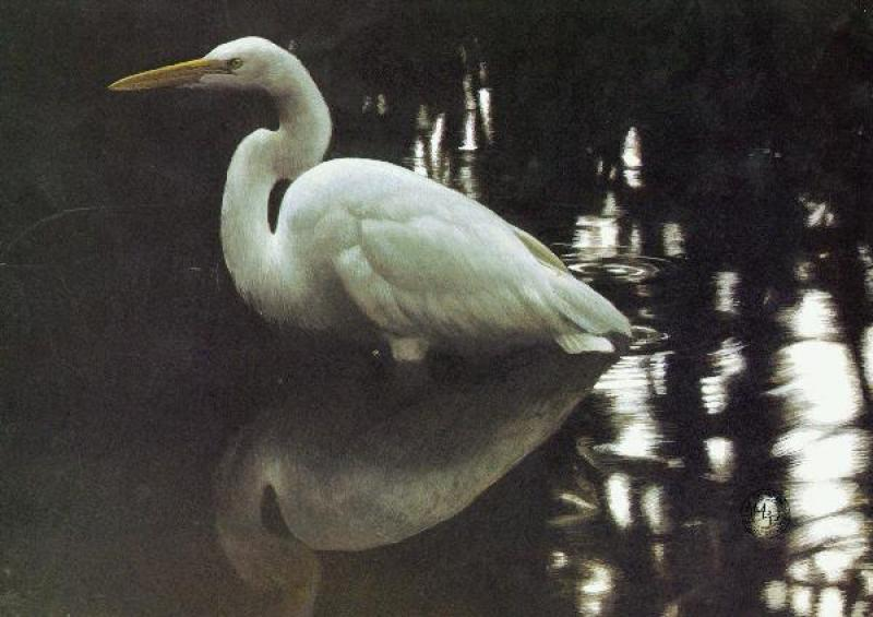 Robert Bateman Mangrove Shadow - Common Egret