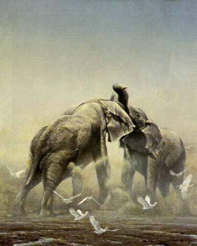 Robert Bateman Sparring Elephants