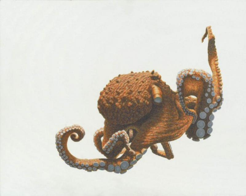 W. Allan Hancock Hang Eight - Giant Pacific Octopus