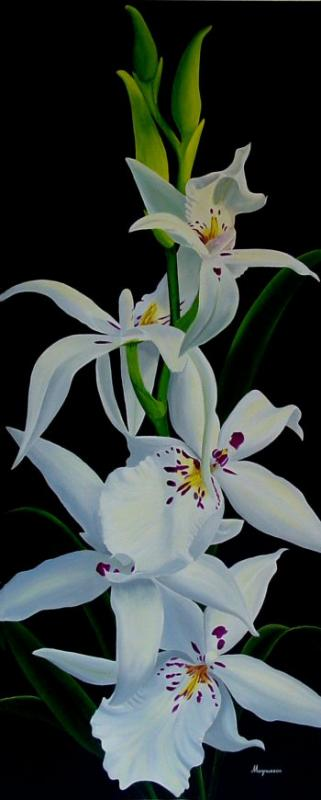 Dennis Magnusson White Fairy Orchid