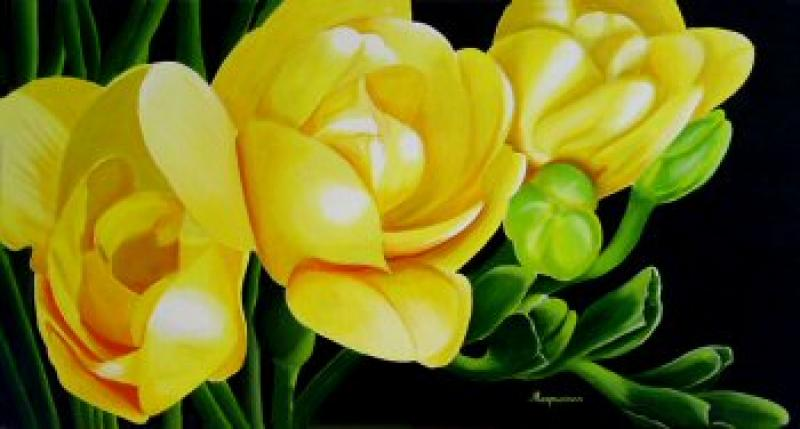 Dennis Magnusson Yellow Freesia