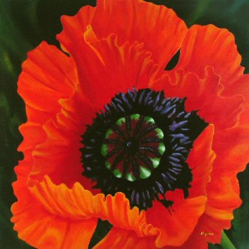 Dennis Magnusson Big Red Poppy