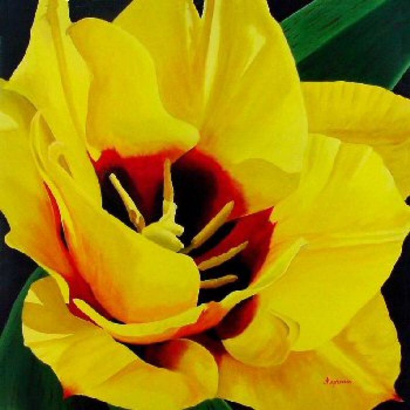 Dennis Magnusson Golden Delight Tulip