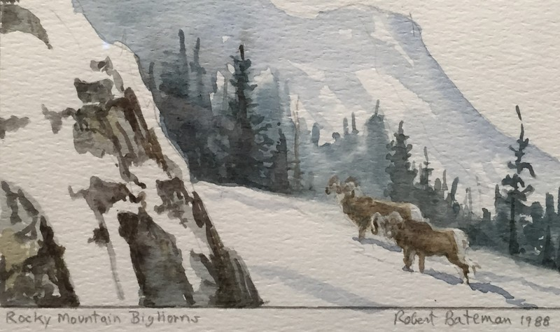 Robert Bateman Rocky Mountain Bighorns