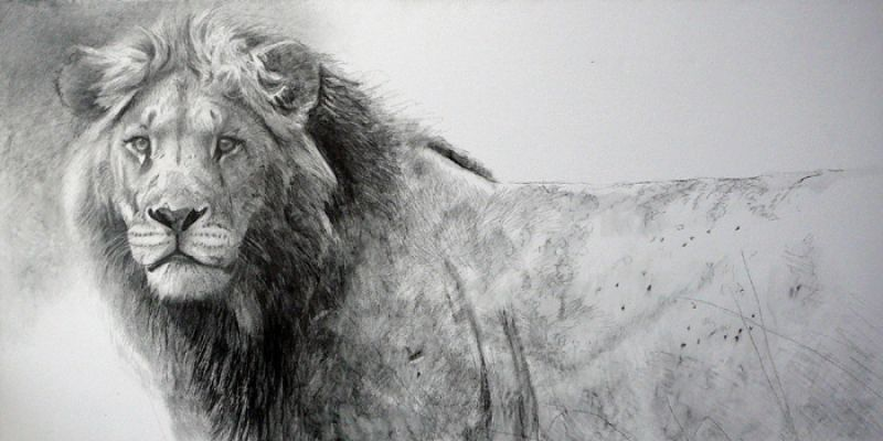 Robert Bateman Warrior Lion, (The)