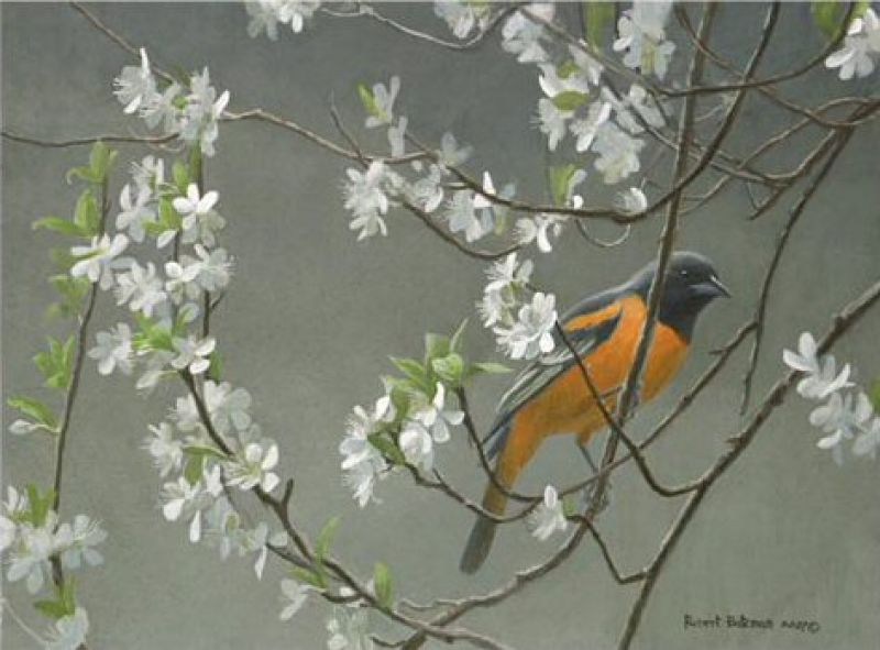 Robert Bateman Baltimore Oriole & Plum Blossoms