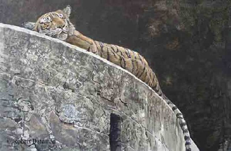 Robert Bateman Old Fort - Tiger