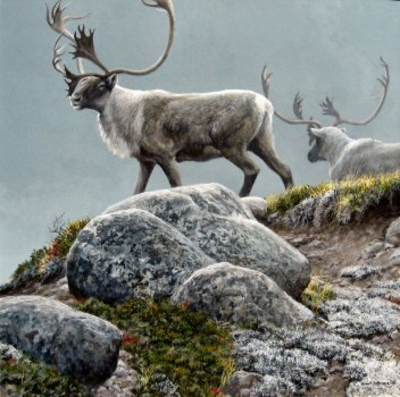 George River Caribou O Robert Bateman Originals