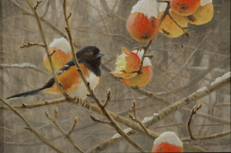 Robert Bateman Winter Apples & Towhee