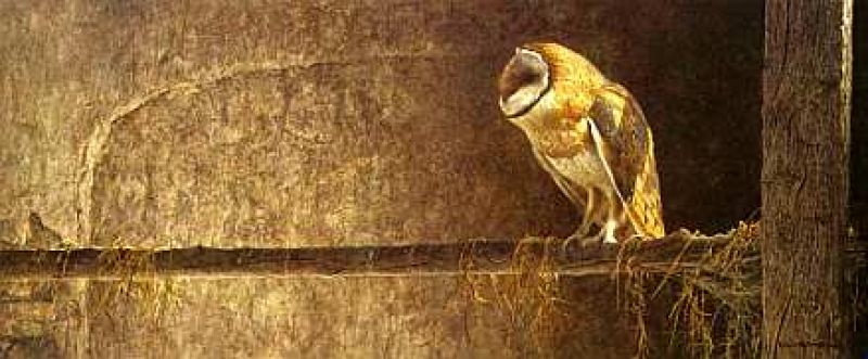 Robert Bateman Catching the Light - Barn Owl