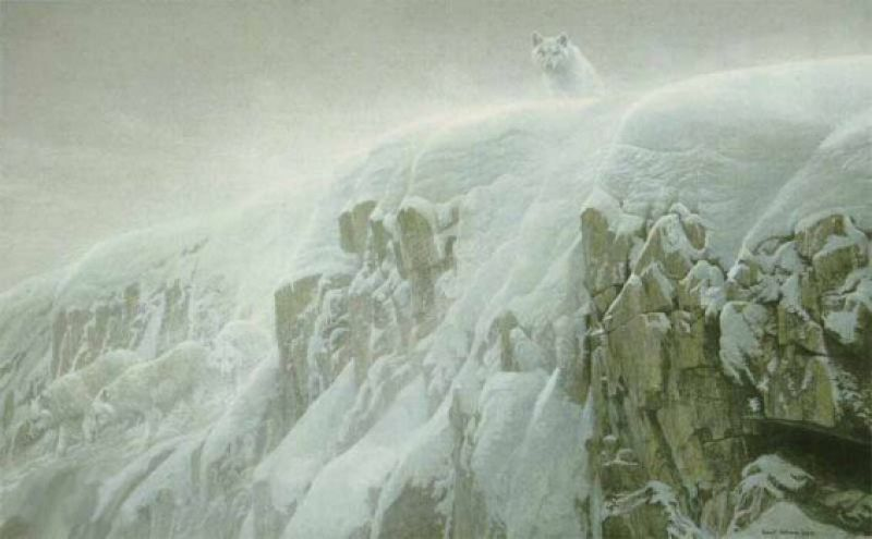 Robert Bateman Arctic Cliff - White Wolves