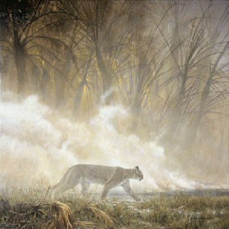 Robert Bateman Smoke Screen - Cougar
