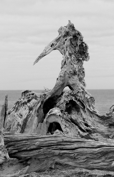 Driftwood by Monica Reekie