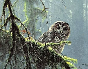 Robert Bateman Mossy Branches - Spotted Owl