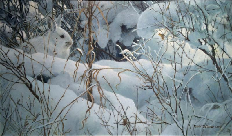 new snow   hare robert bateman originals peninsula