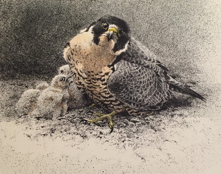 Peregrine and Young by Robert Bateman