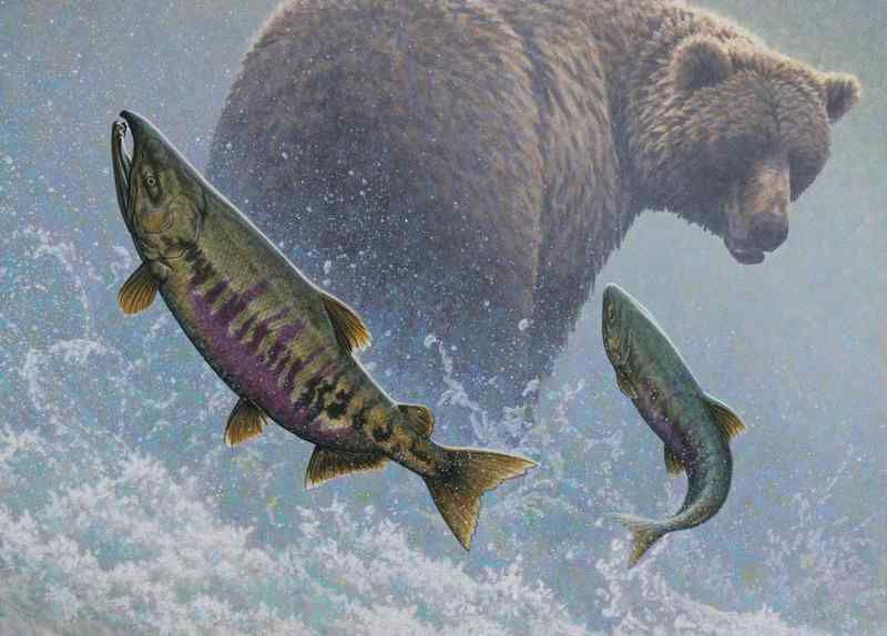 W. Allan Hancock Rapid Approach - Chum Salmon & Grizzly