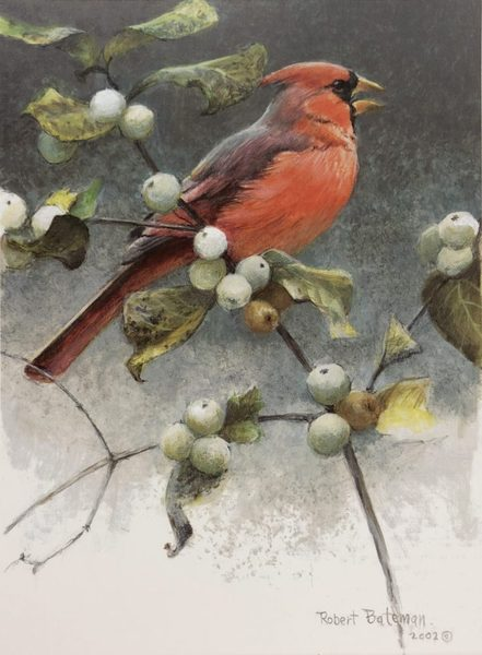 Robert Bateman Cardinal And Snowberries