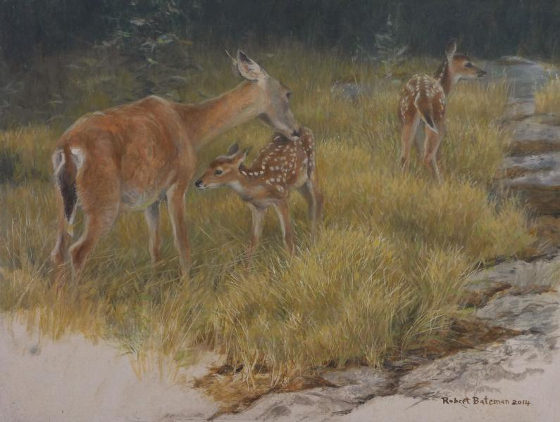 Robert Bateman Deer Family - Mother and Young