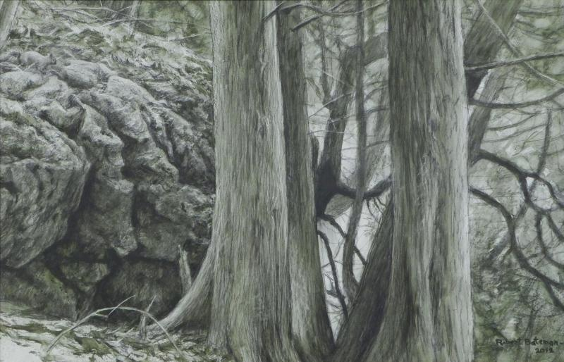 Robert Bateman Grey Squirrel and White Cedars at Mount Nemo