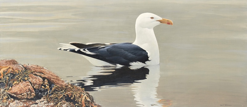 Robert Bateman Gull on Still Water