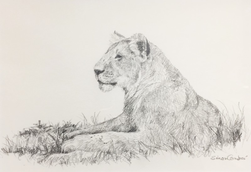 Simon Combes Lion Sketch