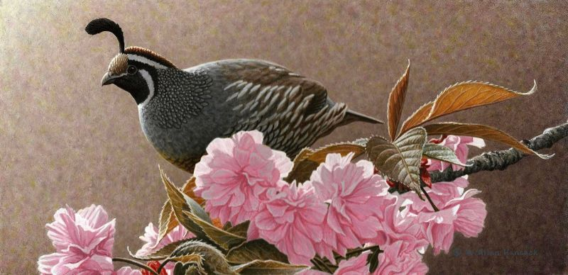 W. Allan Hancock The Stage Is Set - California Quail