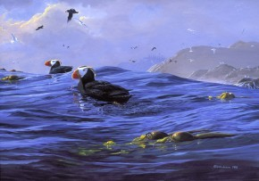 Mark Hobson Tufted Puffins: Riding Pacific Swell
