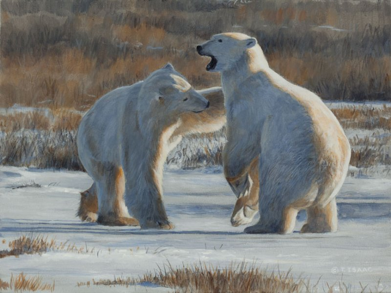 Terry Isaac Tag, You're It (Polar Bear)