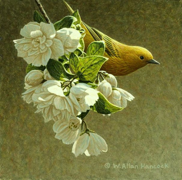 W. Allan Hancock Yellow Warbler & Blossoms
