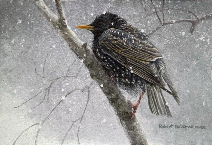 Robert Bateman Young Starling