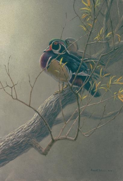 Robert z Bateman Wood Duck Pair in Willow
