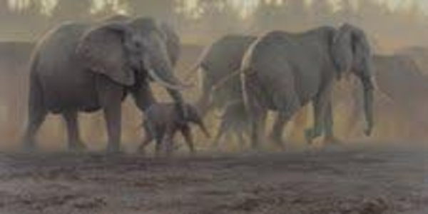 Robert z Bateman Moving Herd - Elephants