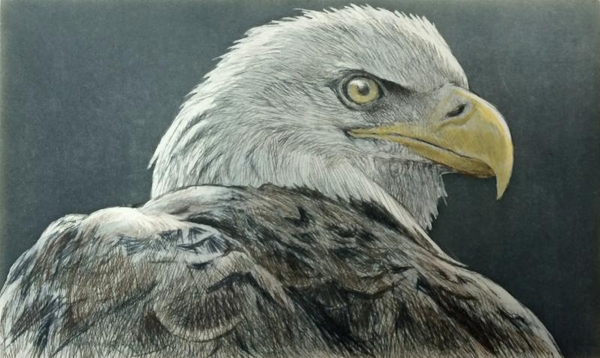 Robert z Bateman Bald Eagle
