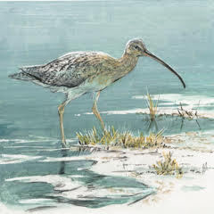 Robert z Bateman Long-Billed Curlew