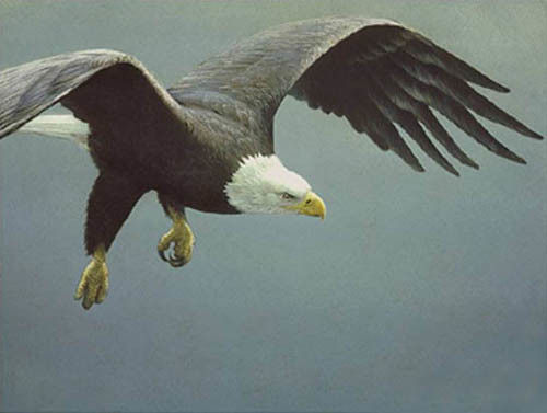 Robert z Bateman Approach Bald Eagle