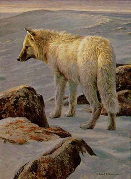 Robert z Bateman Arctic Evening – White Wolf